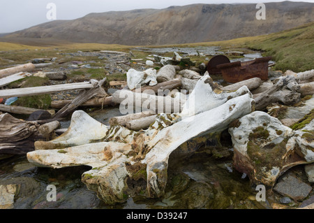 Wal-Knochen aus einem alten Walfangstation, Valrossbukta, Bäreninsel (Bjørnøya), Spitzbergen, Norwegen - Stockfoto
