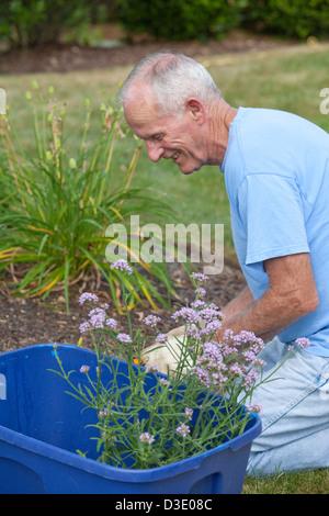 Senior woman Blumen in seinem Garten Pflanzen - Stockfoto