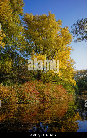 See im Tiergarten im Herbst, Berlin Mitte Berlin, Deutschland - Stockfoto