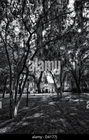 Spanische moos auf live eichen am st john 39 s river - Baum auf spanisch ...