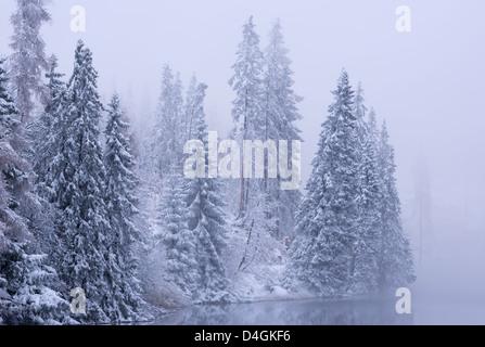 Schneebedeckte Tannen im Winter, hohe Tatra, Slowakei, Europa. - Stockfoto