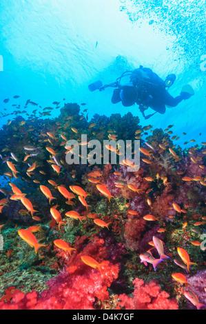 Weibliche Taucher Erkunden Ein Korallenriff Verschiedene