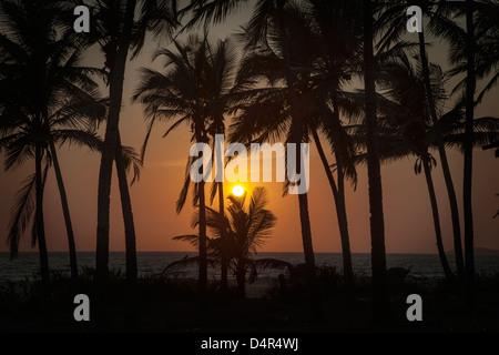 Sonnenuntergang am Arossim Beach, Süd-Goa, Indien. Palmen, die Silhouette. - Stockfoto