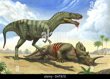 Ein Gorgosaurus Libratus steht über den toten Körper eines Centrosaurus. - Stockfoto