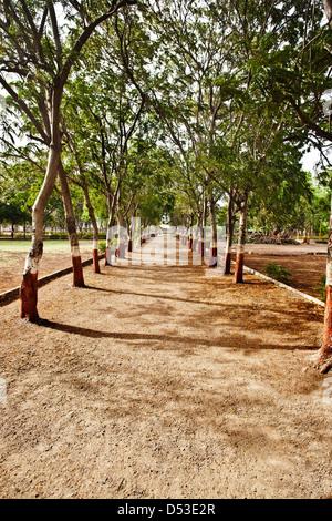Bäume über einen Fußweg in einem Park, Rajkot, Gujarat, Indien - Stockfoto