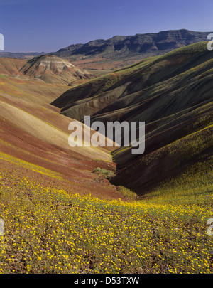 USA, Oregon, John Day Fossil Betten Nationaldenkmal. Chaenactis Blumen säumen vulkanischen Tongestein Hänge des - Stockfoto