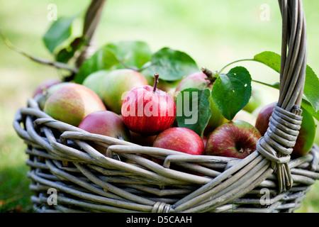 Frisch und bunt Äpfel im Korb, selektiven Fokus Stockfoto