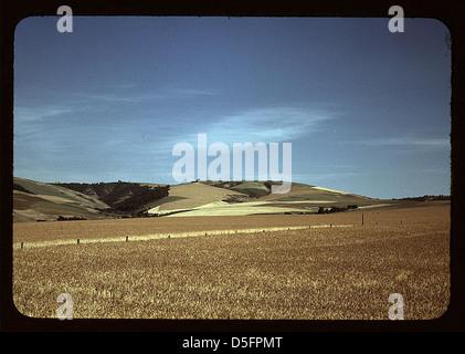 Weizenfarm, Walla Walla, Washington (LOC) - Stockfoto