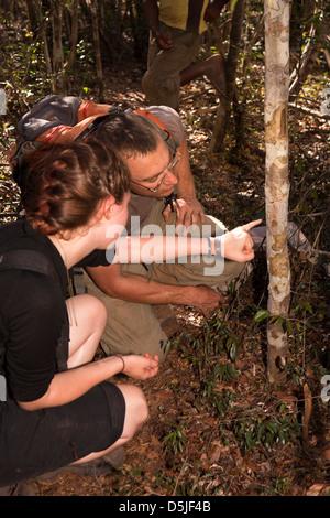Madagaskar, Betrieb Wallacea, Studenten- und Matsedroy Wissenschaftler im Wald Stockfoto