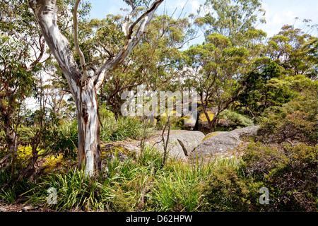 Eine Oase der Vegetation auf kahlen Felsen, kahle Felsen-Nationalpark, New South Wales, Australien - Stockfoto