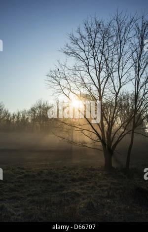 Am frühen Morgen Sonne durch den Nebel & Bäume - Stockfoto