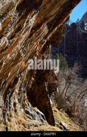 Wasser tropfte die Weeping Rock. Zion Nationalpark, Utah, USA. - Stockfoto