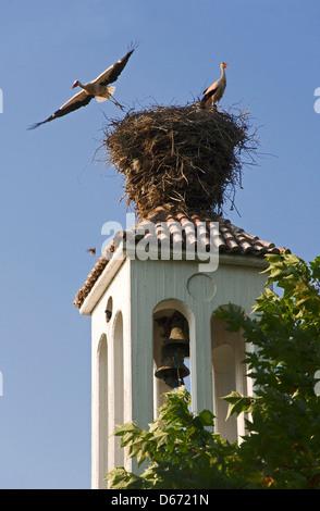 Zwei Weißstörche im Nest auf Kirchturm - Stockfoto