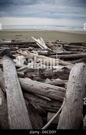 Treibholz auf Long Beach, Vancouver Island - Stockfoto