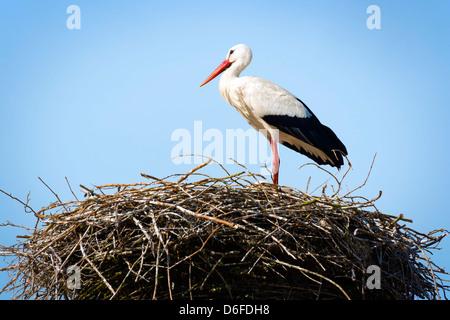 Storch in sein Nest bei warmem Wetter stehen - Stockfoto