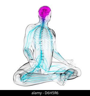 Gesundes zentrales Nervensystem, artwork - Stockfoto