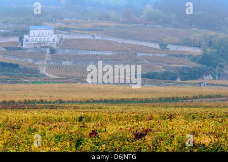 Am frühen Morgen Nebel über die Weinberge der Domaine du Château Gris außerhalb der kleinen französischen Stadt - Stockfoto