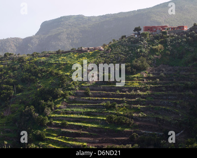Terrassenförmig angelegten Feldern mit Bauernhäusern oben auf einem steilen Bergrücken, Teno Alto Berge in Teneriffa - Stockfoto