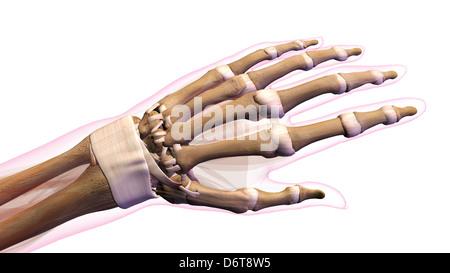 Menschlichen Fingerknochen, Computer Bild Stockfoto, Bild: 92445005 ...