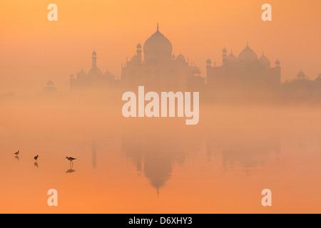 Skyline von Taj Mahal, Agra, Uttar Pradesh, Indien - Stockfoto