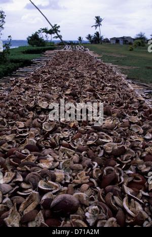 Fidschi Koro Island Village Szene Kopra Kokosnuss Trocknen