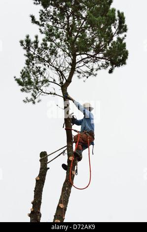 Abholzen Hinterhof Baum 130213_71018 - Stockfoto