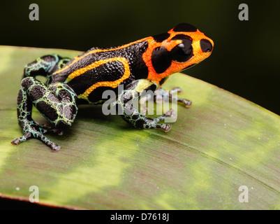 terrarium f r regenwald heimtiere wie exotische und tropische fr sche eidechsen und schlangen. Black Bedroom Furniture Sets. Home Design Ideas