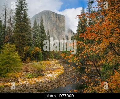 Yosemite Nationalpark, Kalifornien; Ein Blick auf El Capitan entlang des Merced River mit einem Hartriegel in Herbstfarben. - Stockfoto