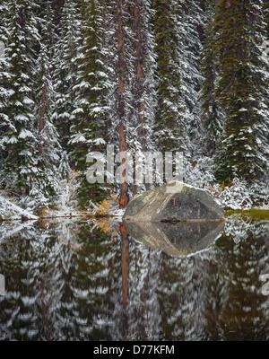 Mount Baker-Snoqualmie National Forest, WA: Ein ruhigen Teich mit Schnee bedeckt, Douglasien und boulder - Stockfoto