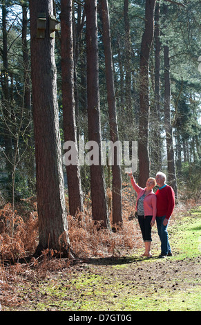 Älteres Paar, Wandern im Wald, Norfolk, england - Stockfoto