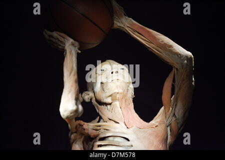 Danzig, Polen. 10. Mai 2013 die menschlichen Körper-Ausstellung in ...