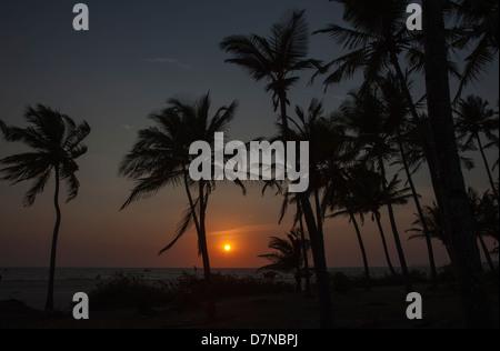 Ein Sonnenuntergang über das Arabische Meer, Arossim Beach, Goa, Südindien durch Palmen gesehen. - Stockfoto