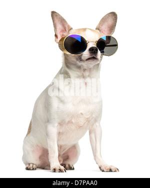 Chihuahua, 2 Jahre alt, sitzt und das Tragen von Sonnenbrillen vor weißem Hintergrund - Stockfoto