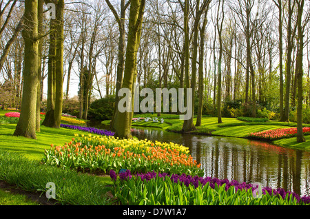 europa niederlande lisse tulpen stockfoto bild 5516668 alamy. Black Bedroom Furniture Sets. Home Design Ideas