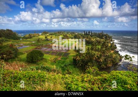 Taro-Felder in Hawaii - Stockfoto