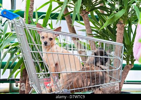 Zwei Hunde in den Markt-Warenkorb - Stockfoto
