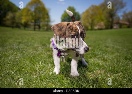 Live Love Bark Dog Rescue