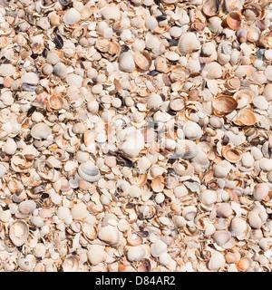 Hintergrund von Muscheln im Sand.