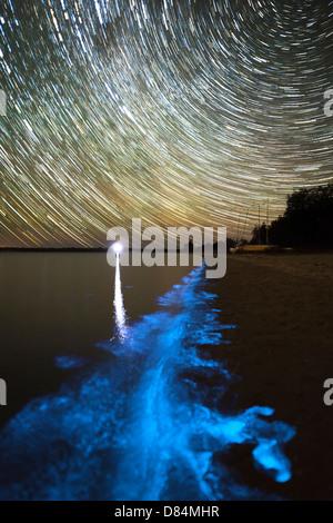 Sternspuren und Biolumineszenz in Gippsland Lakes, Victoria, Australien. - Stockfoto