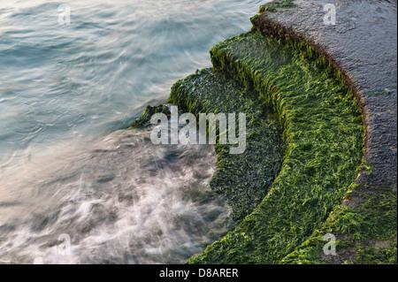 Venedig, Italien. Das Meer, waschen über Unkraut bewachsenen Stufen - Stockfoto