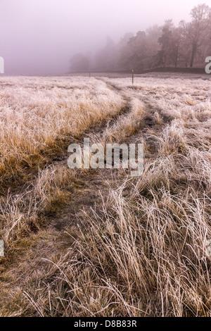 Wanderweg durch durch Wiese bedeckt in Raureif, Bradgate Park, Charnwood, Leicester, England, UK - Stockfoto