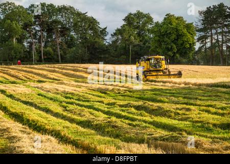 Landwirtschaft, Mähdrescher - Stockfoto
