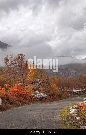 schmale Landstraße im Herbst, Shkodra, Montenegro - Stockfoto