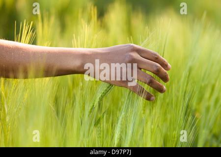 African American Hand im Weizenfeld - afrikanische Bevölkerung Stockfoto