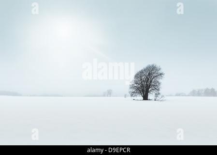 Alter Baum im Feld, trübe Winterlandschaft - Stockfoto