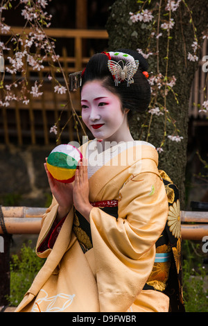Echte Geisha posiert vor einer Kirsche blühen Baum in die Geisha-Viertel Gion in Kyōto, Japan - Stockfoto