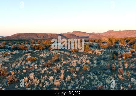 Karoo Vegetation, Prinz Albert, Western Cape, Südafrika - Stockfoto