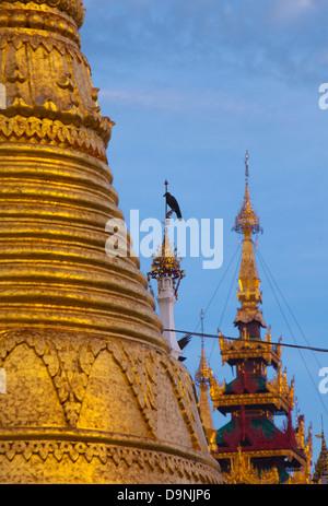 Eine Krähe sitzt hoch unter den goldenen Türmen der Shwedagon, Burmas heiliger Tempel im Herzen von Rangun. - Stockfoto