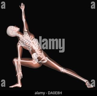 3D Rendern eines weiblichen medizinische Skeletts in einer Yogaposition - Stockfoto