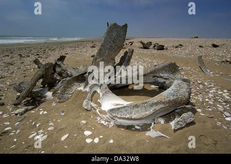Wal-Knochen bleibt, Skelettküste Namibias - Stockfoto